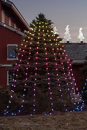 Existing Fir Tree With Rgb Strings